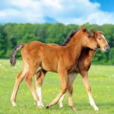 2 young colts.jpg