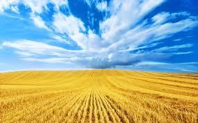abundance of grain