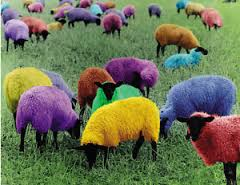 multi colored sheep