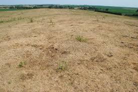 drought in pastureland