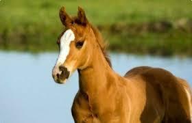 lone horse in field.jpg