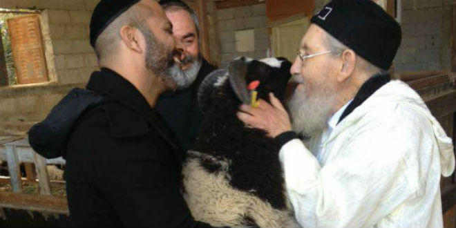 Rabbi Kisses Jacob's Sheep